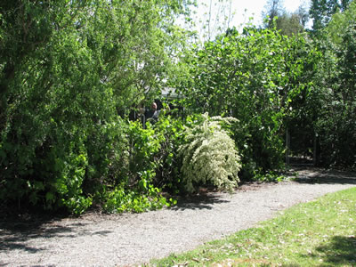 Garofalo Gardens in Red Bluff: Comparisons Between 1998, 2003, and 2007